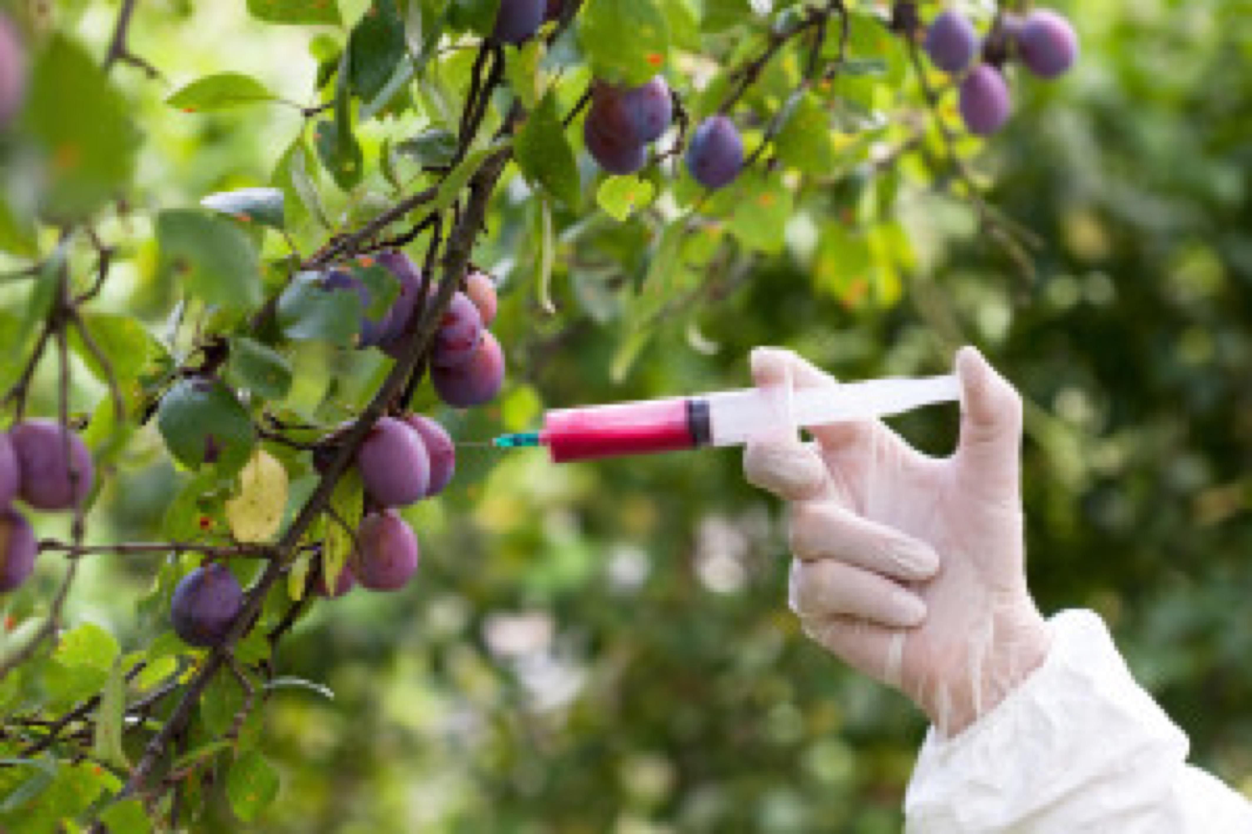 Genetically modified food. Genetic engineering.