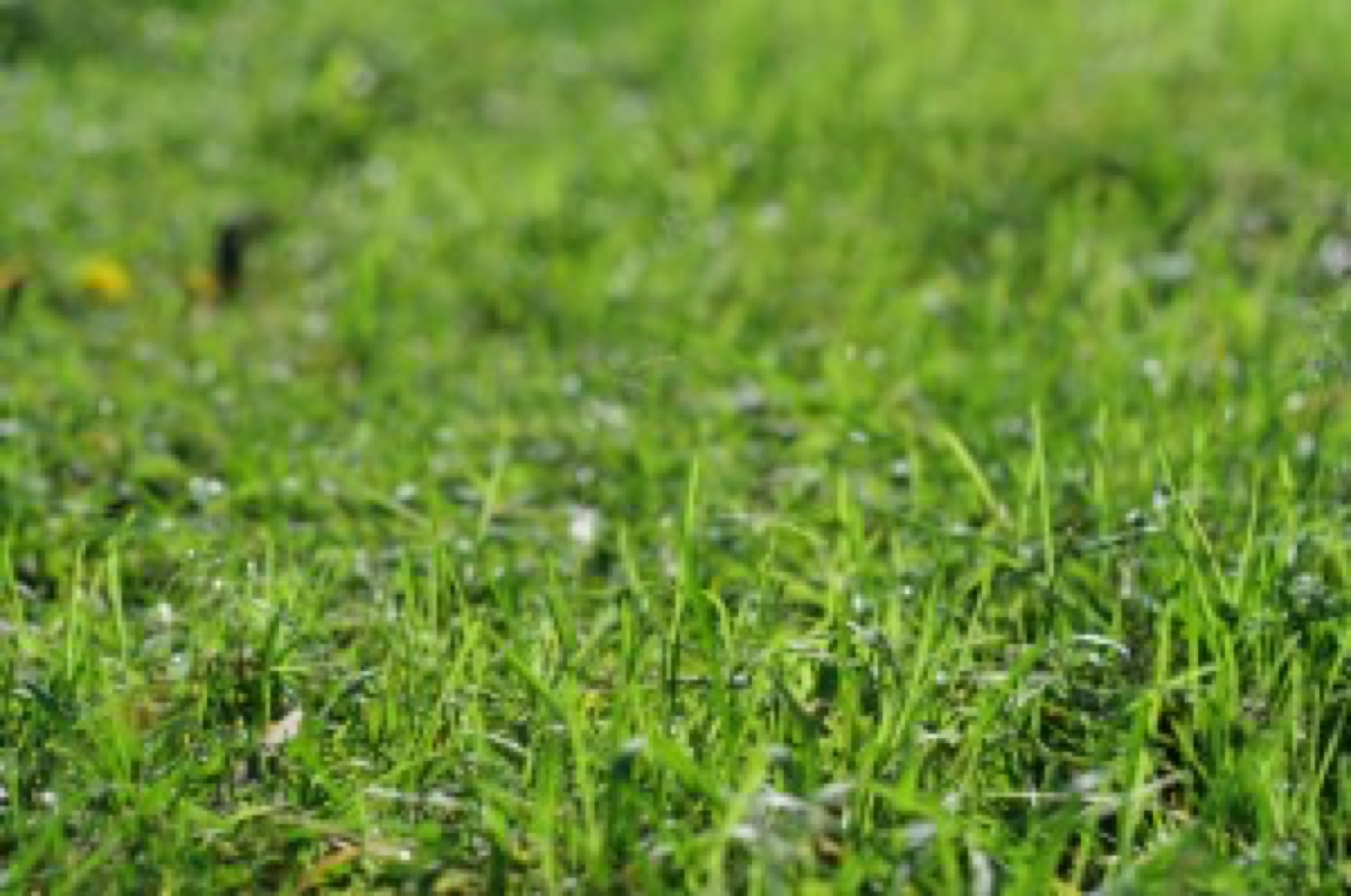 blog image - grass