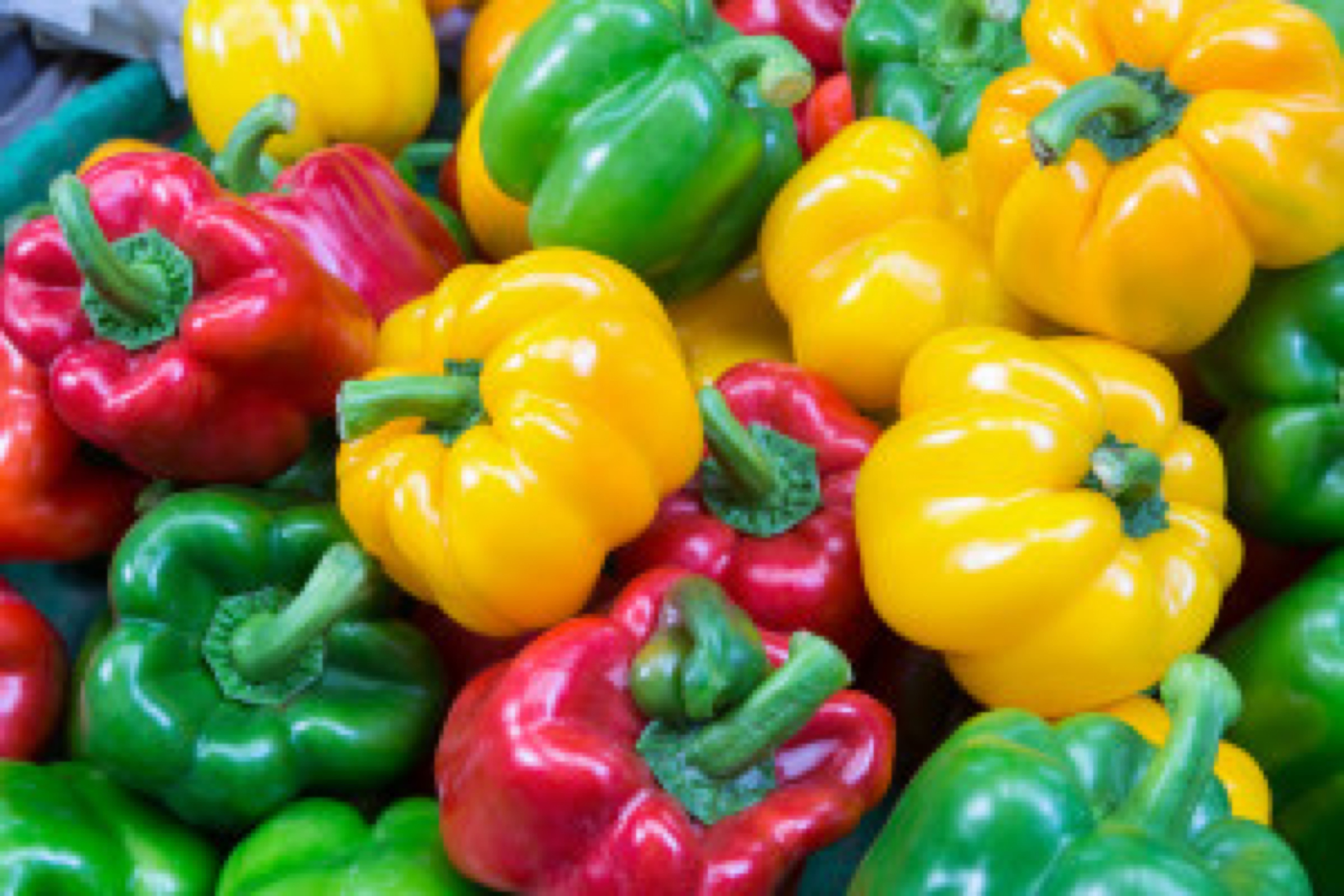Colorful bell peppers ready for sales in fresh market, Bangkok, Thailand