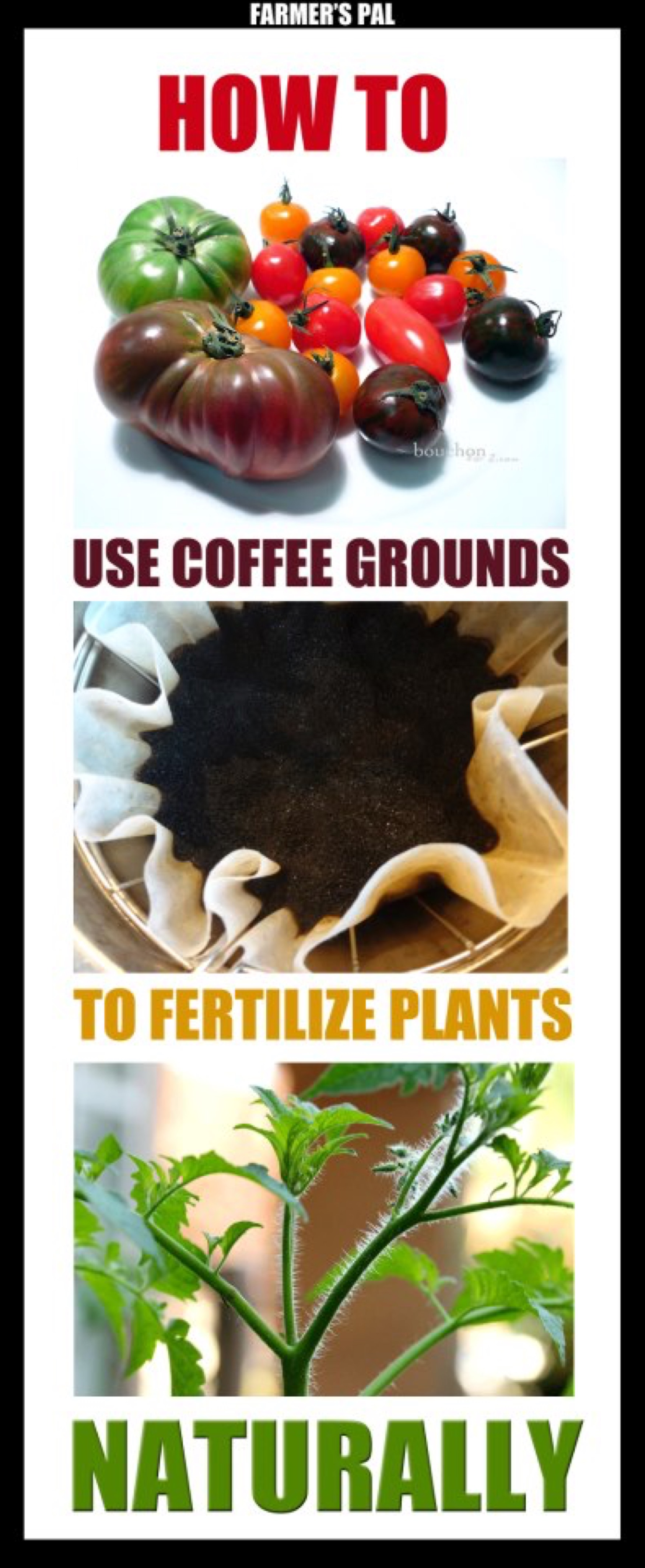 amoils coffee grounds