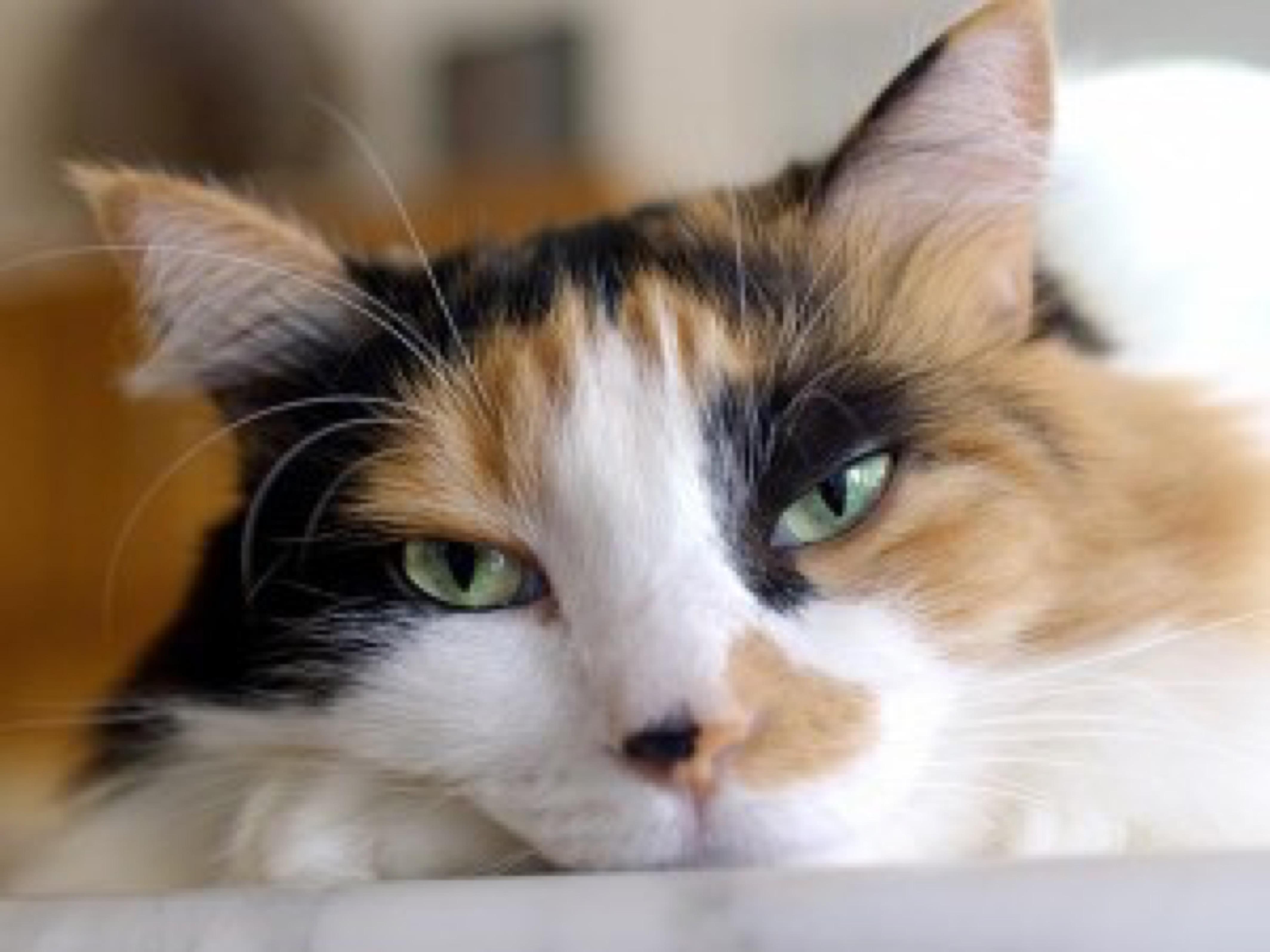 blog image - cat