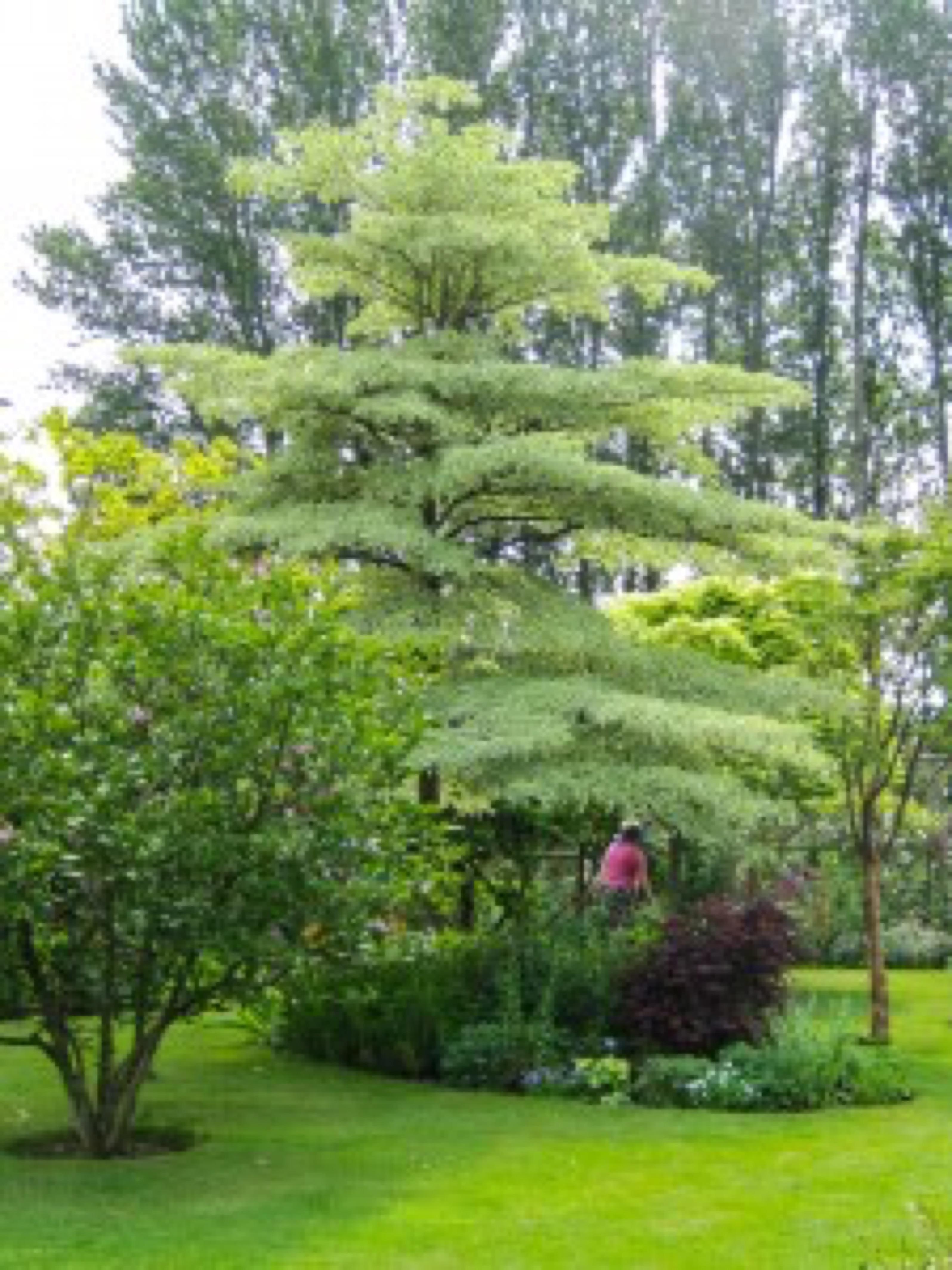 Oversratton Gardens 2016-48
