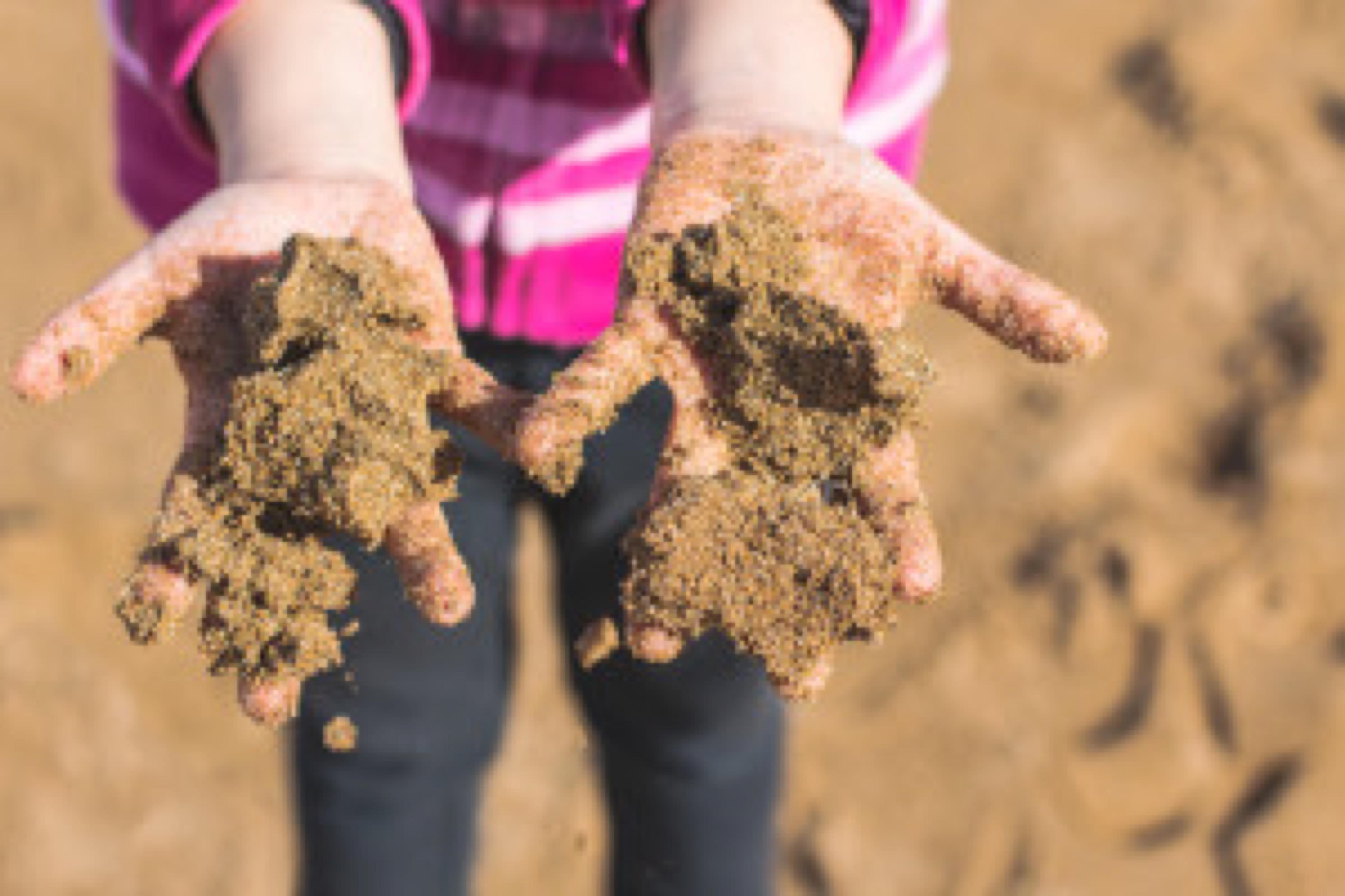 Hands of child full of wet sand