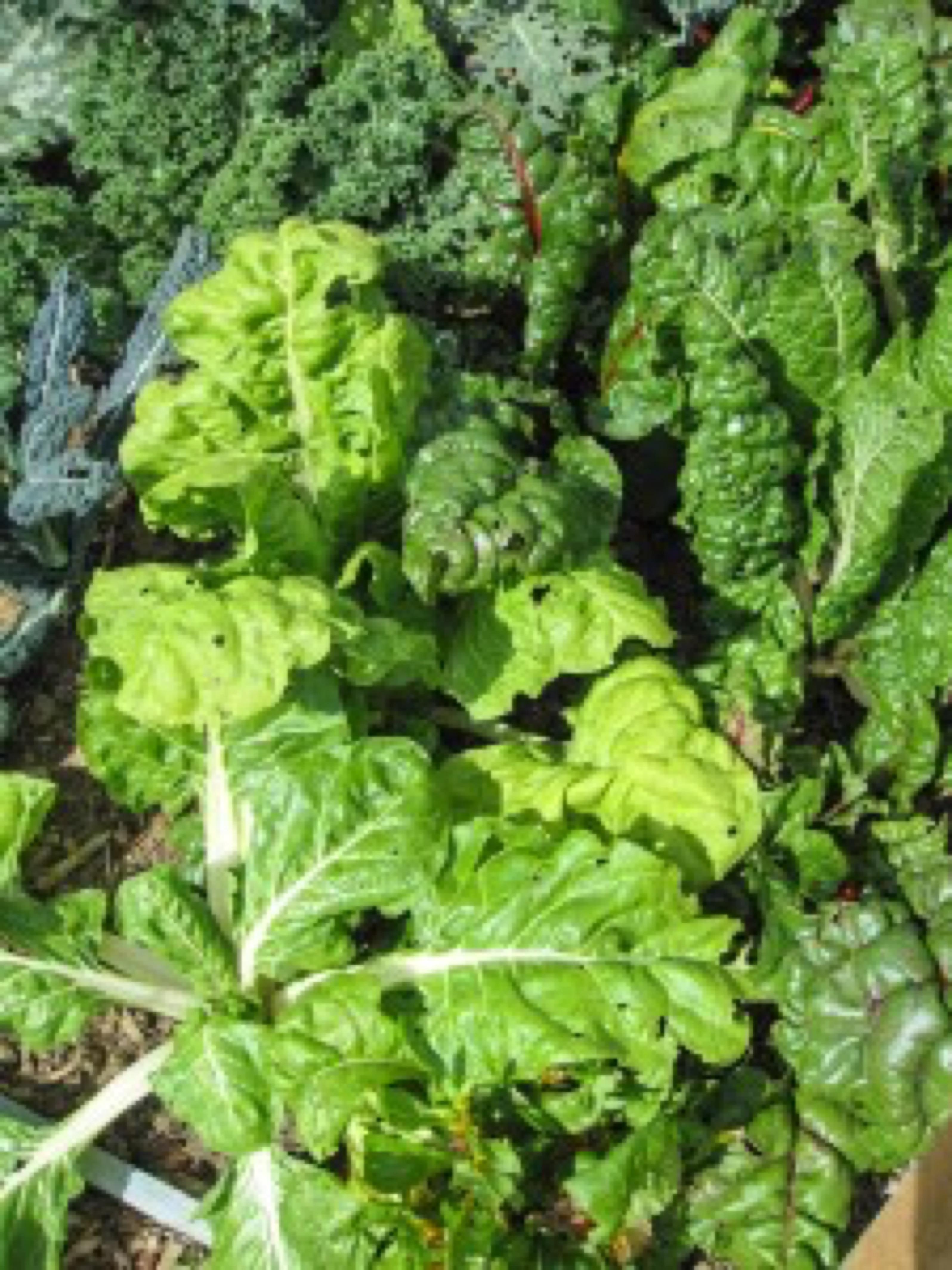 Fred's greens (2) jpg