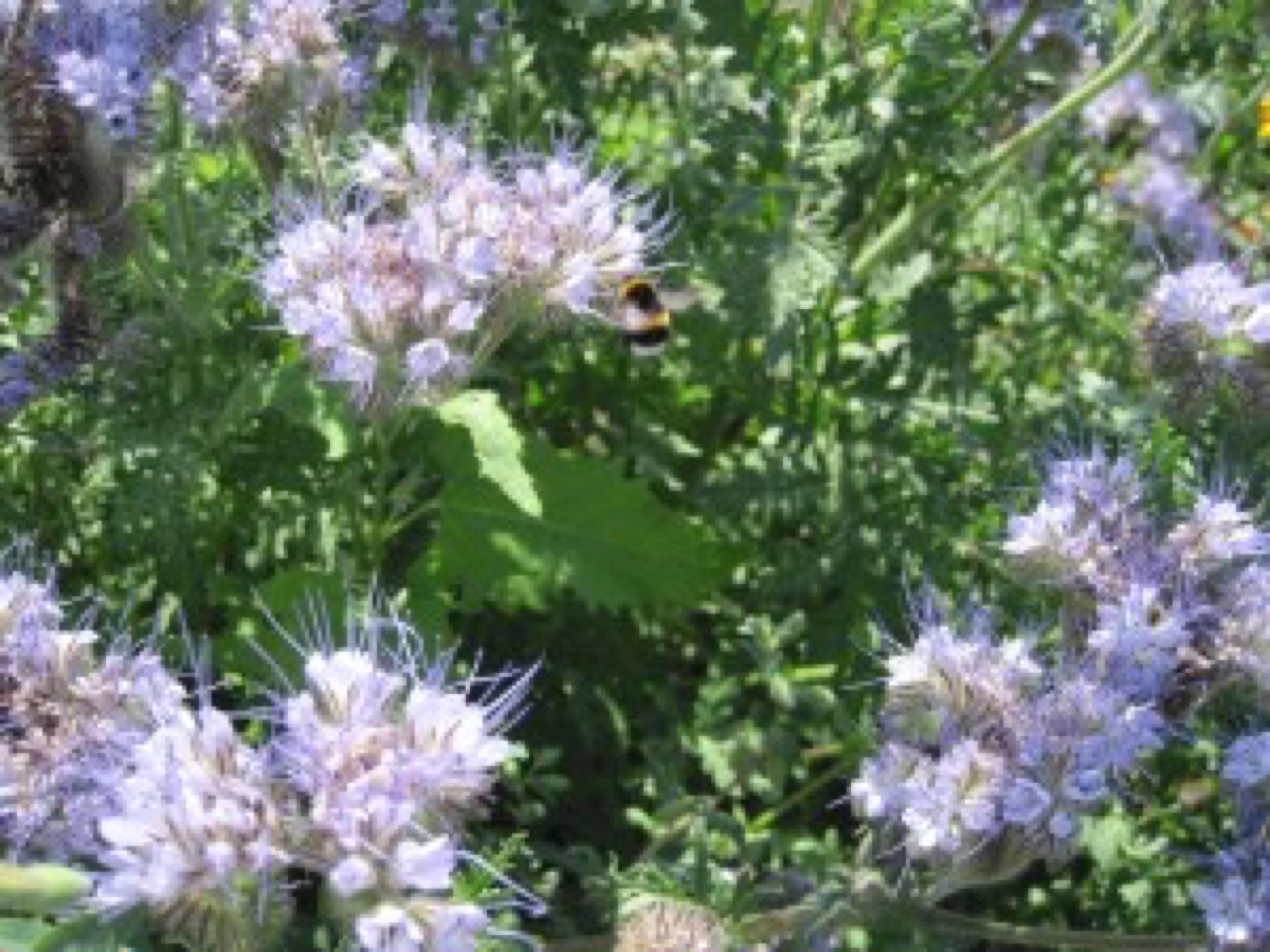 bee (2) jpg