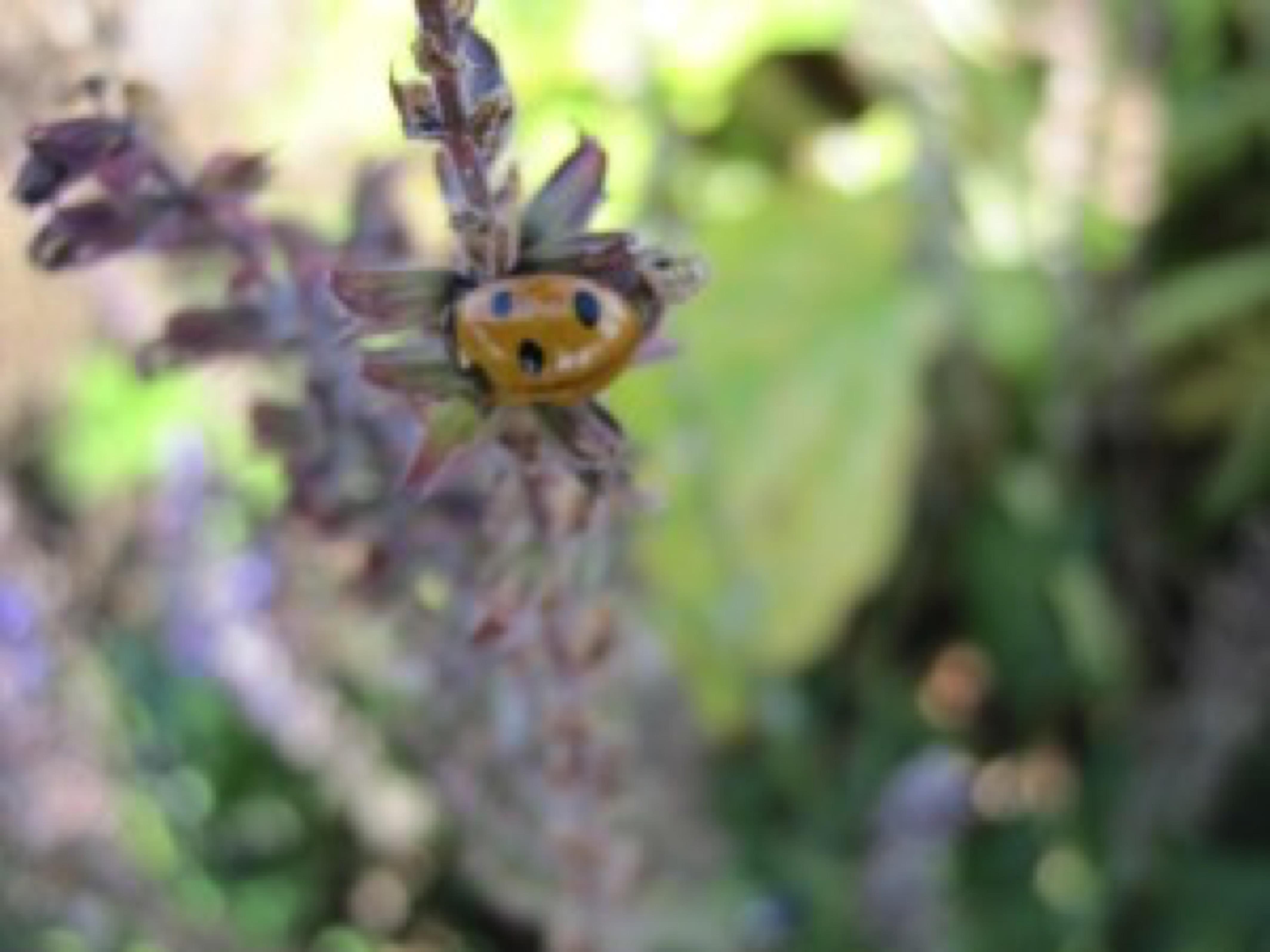ladybird jpg