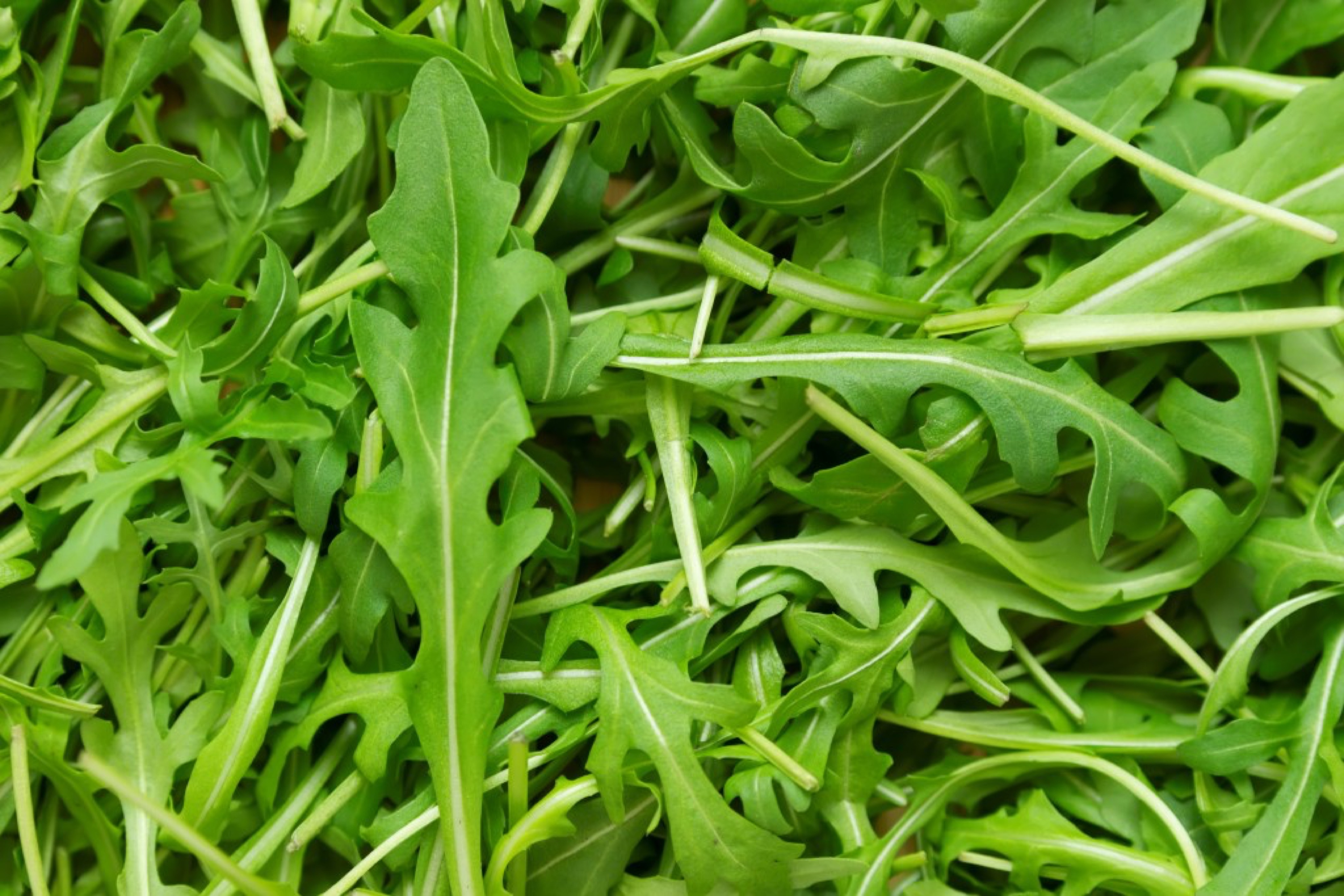 full frame wallpaper of rucola leaves in top view